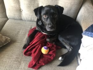 dog with red blanket and ball on couch