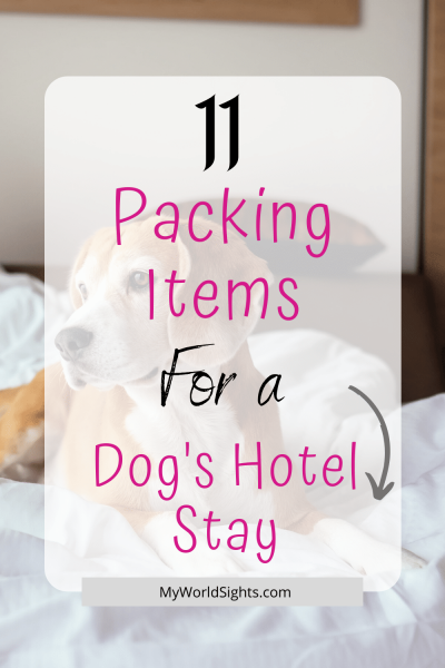 dogs hotel stay packing list