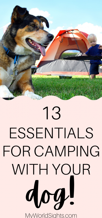 tent camping with dogs